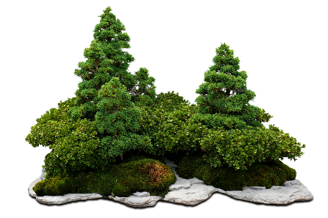 Bonsai, Bonsai Tree, Green Tree, The Stones