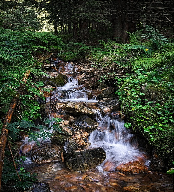 Stream, Tatry, Water, The Stones, Torrent, Tree
