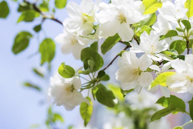 Begonia Flower, Spring, Spring Day, The Warm Sun