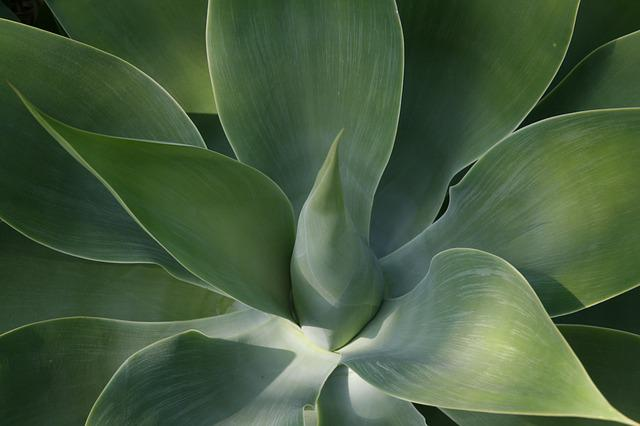 Thick Sheet Greenhouse, Green, Succulent, Leaves