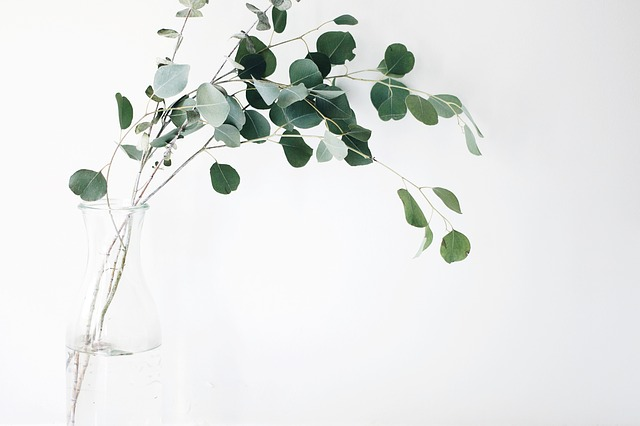 Still, Items, Things, Plants, Vase, Branches, Leaves