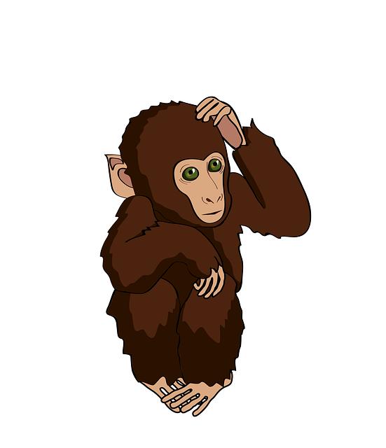 Monkey, Marmoset, Think