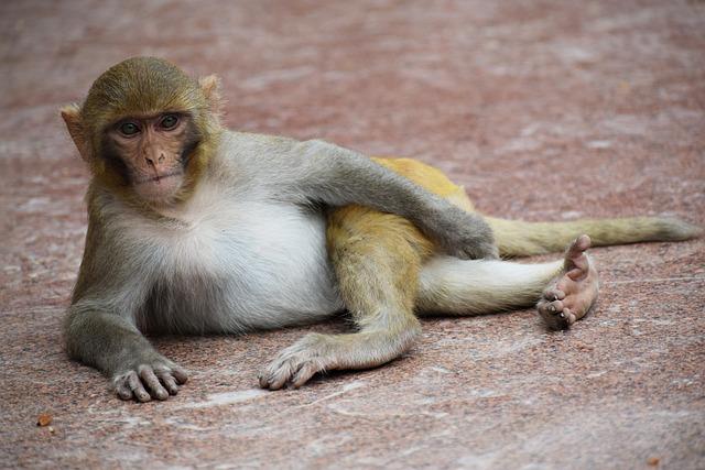 Monkey, Animal, Mammal, Ape, Thinking, Portrait