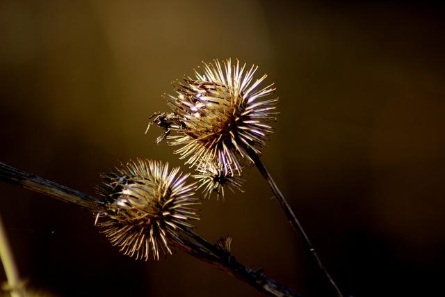 Nature, Thistle, Plant, Wild Flower, Thistle Flower
