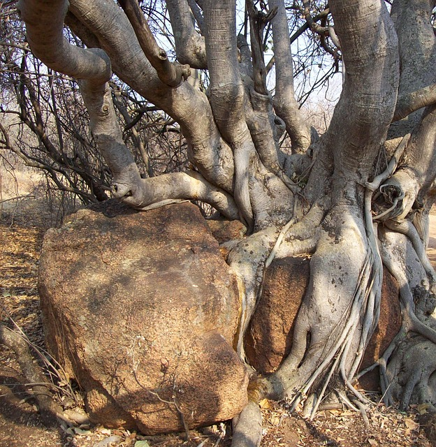 Tree, Bark, Bush, Branches, Thorn, Nature, Branch