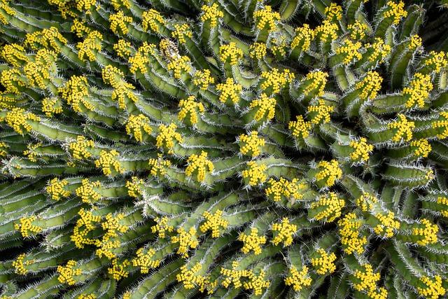 Cactus, Thorn, Nature, Plant, Sting