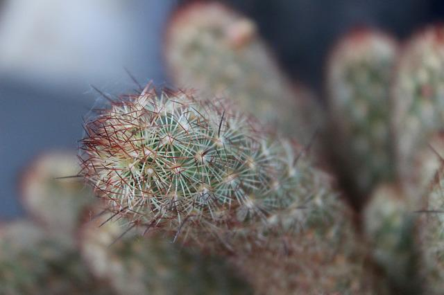 Succulent Plant, Cactus, Fat Plants, Nature, Thorns