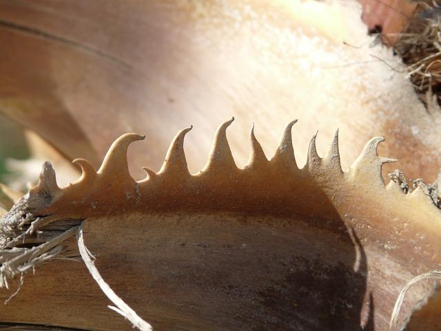 Thorns, Pink, Palm, Brown, Washingtonia Filifera, Smart