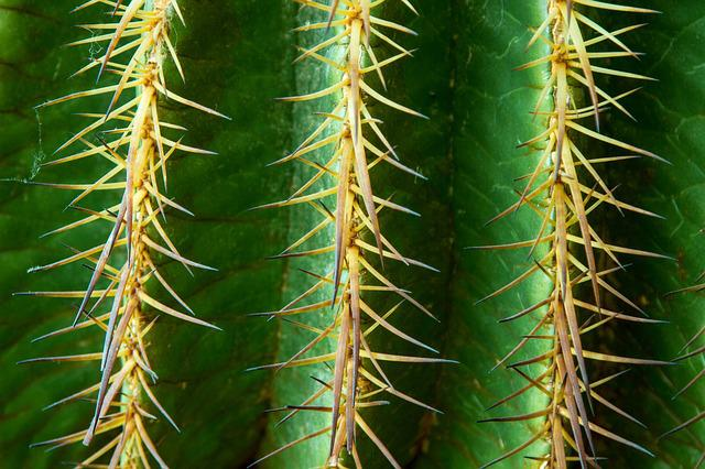 Cactus, Spur, Thorns, Green, Prickly, Plant