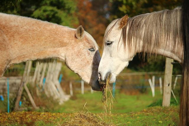 Horse, Mold, Thoroughbred Arabian, Eat, Hay, Pasture