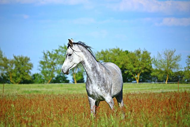 Horse, Mold, Meadow, Thoroughbred Arabian, Gray Mold