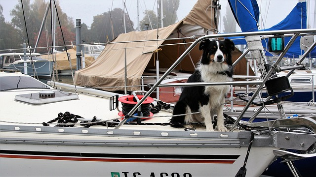 Dog, Thoroughbred, Sailboat, Yacht, Boat, The Sail
