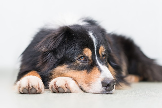 Dog, Thoughtful, Quiet, Relaxed, Cute