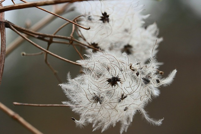 Flower, Threads, White, Beautiful, Forest, Wild