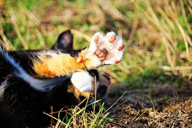 Cat, Mieze, Paw, Talon, Domestic Cat, Three Coloured