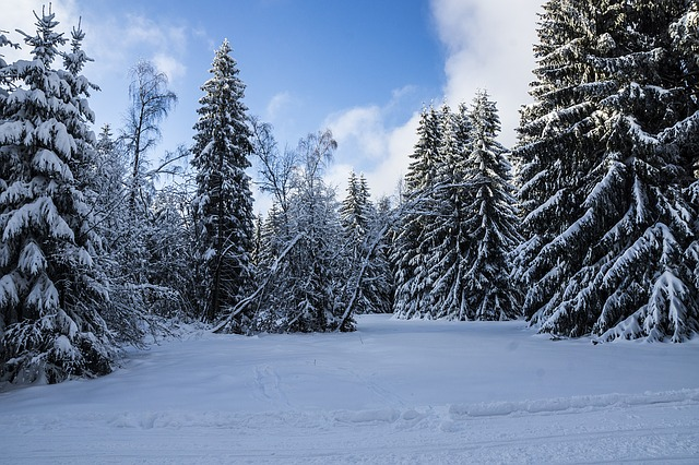 Winter, Thuringia Germany, Forest, Snow, Snow Landscape