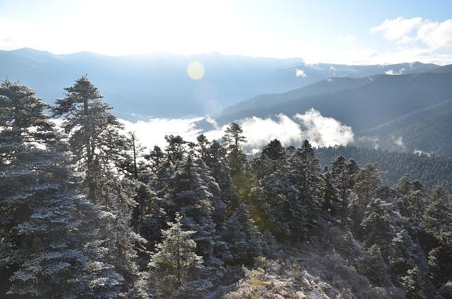 Tibet, Nyingchi, Views, Cloud, Cedar, Snow, Photography