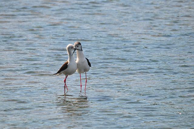 Waters, Bird, Natural, Wild Animals, Tideland