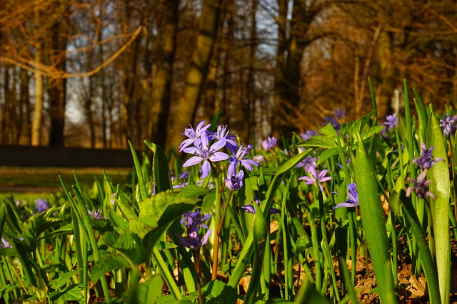 Tiefenschärfe, Depth Of Field, Blur, Blue Star, Scilla