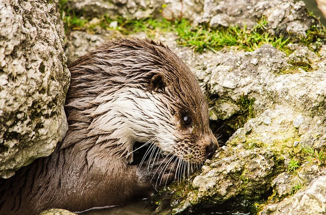 Otter, Zoo, Tiergarten, Cute, Wet