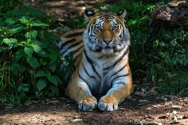 Animal World, Nature, Cat, Mammal, Carnivores, Tiger