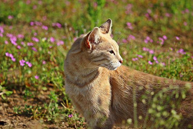 Cat, Mieze, Tiger Cat, Grass, Mackerel, Breed Cat, Pet