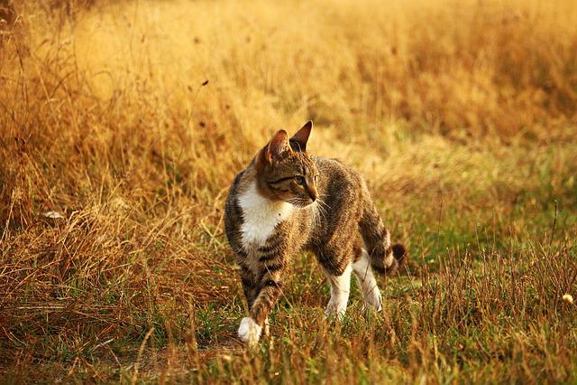 Cat, Kitten, Mieze, Tiger Cat, Mackerel, Domestic Cat
