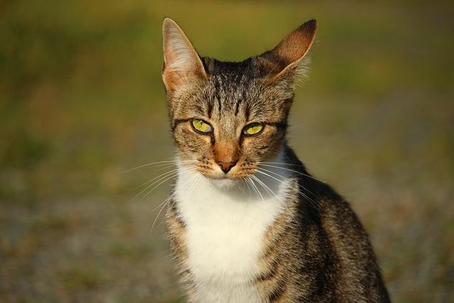 Cat, Mieze, Kitten, Mackerel, Tiger Cat, Domestic Cat