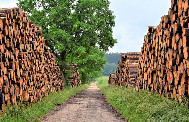 Wood, Timber Industry, Forest, Tree Trunks, Nature