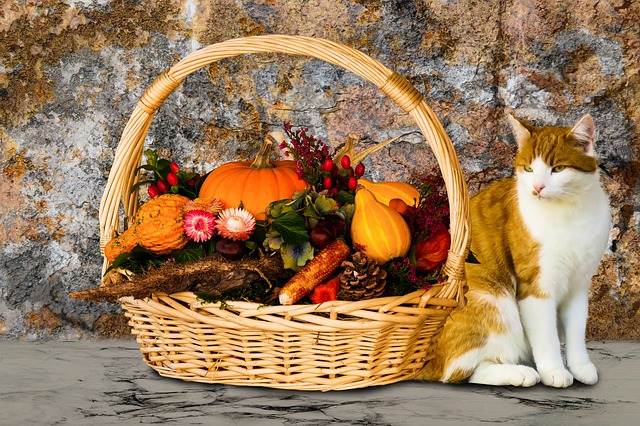 Eat, Animals, Autumn, Time Of Year, Pumpkin, Cat