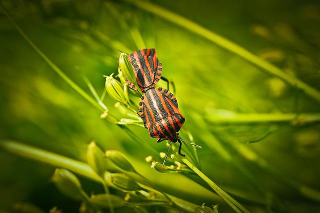 Silphidae, Insect, Beetle, Animal, Tingling Sensation