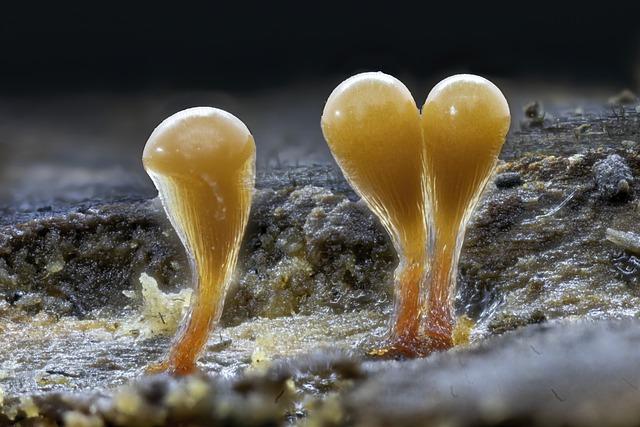 Slime Mold, Tiny, Micro, Macro, Close-up, Organism