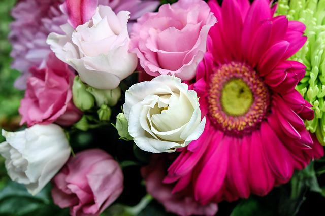 Lisianthus, Flower, Flowers, White, Pink, Tiresome