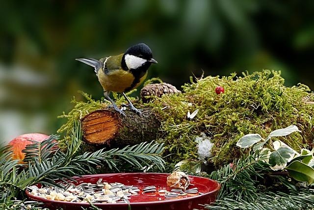 Nature, Bird, Tit, Parus Major, Songbird, Hunger
