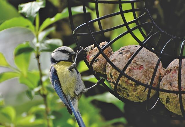 Blue Tit, Tit, Songbird, Small Bird, Bird, Bill