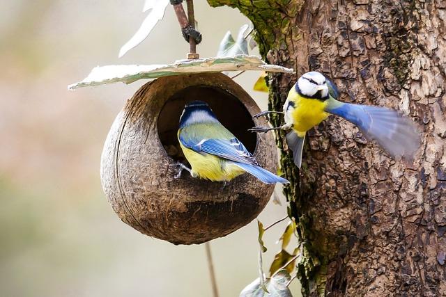 Animal, Bird, Tit, Fly, Eat, Food, Wing, Blue Tit