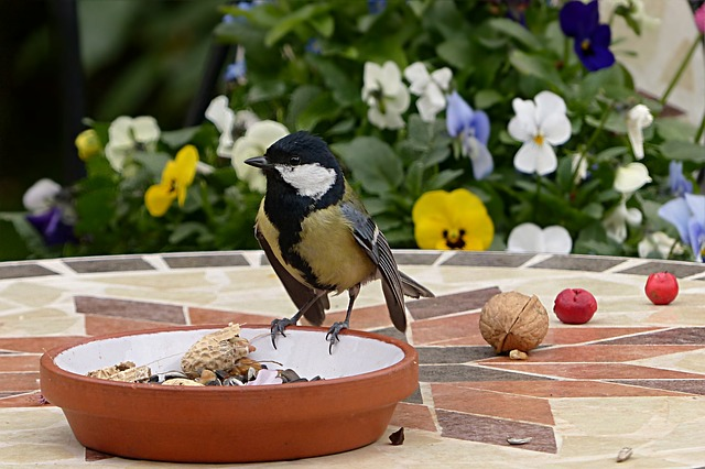 Animal, Bird, Tit, Parus Major, Young, Garden, Foraging