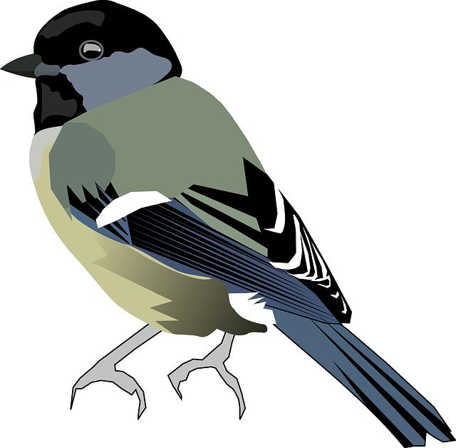 Tit, Bird, Chickadee, Titmice, Paridae, Passerine Bird
