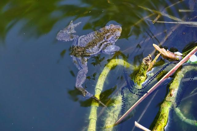 Nature, Waters, Toad, Pond, Swim, Pools