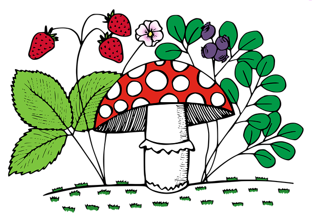 Fungus, Forest, Moss, Toadstool, Blueberries