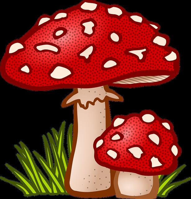 Fungal, Mushroom, Plant, Toadstool