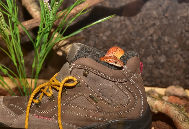 Corn Snake, Hiking Shoes, Hide, Tongue, Snake