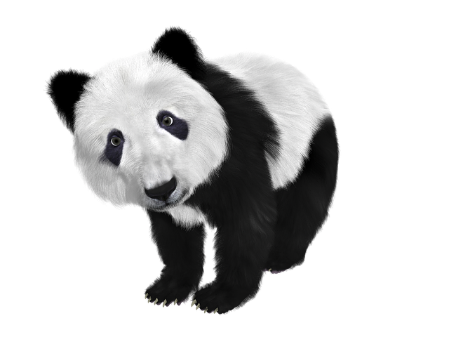 Panda, Panda Baby, China, Toon, Furry, Black And White