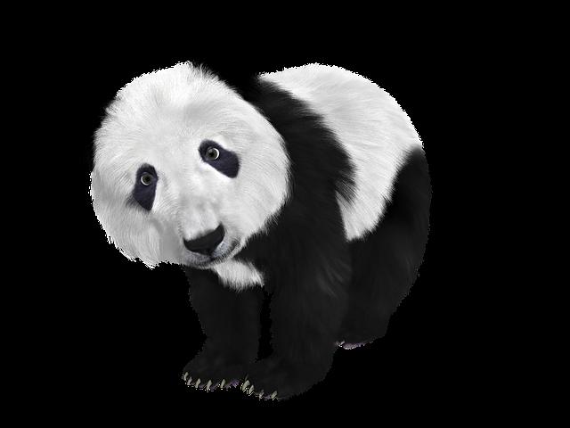 Panda, Panda Baby, China, Toon, Furry, Black And White