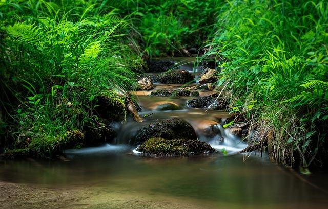 Creek, Torrent, Nature, Slovakia, Water