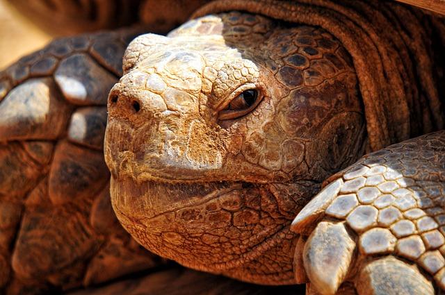 Turtle Criss-crossed, Africa, Senegal, Tortie, Carapace