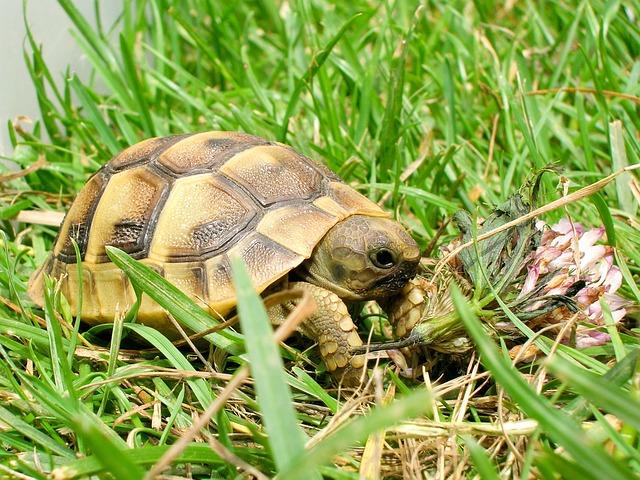 Reptile, Turtle, Tortoise