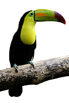 Bird, Parrot, Toucan, Bill, Colorful, Beautiful, Fly