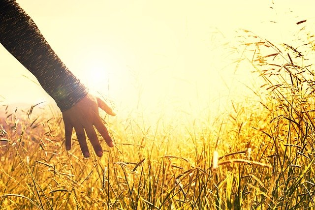 Hands, Grasses, Sunset, Feel, Touch, Field, Grass