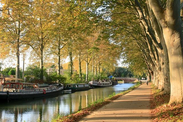 Canaldumidi, Toulouse, Trees, Autumn, Hautegaronne